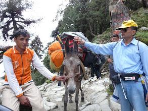 Photo: Kalu,the mule