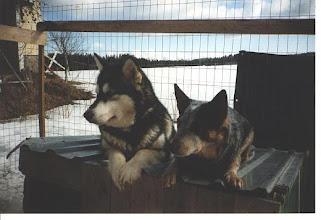 Photo: Sinni ja karjakoira Taru 1993