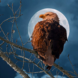 Mighty Eagle by Bill Diller - Digital Art Animals ( digital, full moon, michigan, nature, bald eagle, branches, state wildlife area, fish point wildlife area, tree limbs, wildlife area, bird, eagle, animal, wildlife )