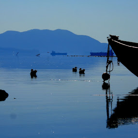 Naturally Blue by Vanessa Latrimurti - Landscapes Waterscapes ( water, washington state, mountains, oyster yard, blue, ducks, fishing, boat )