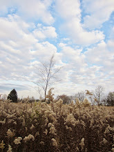 Photo: Fluffy fields under fluffy clouds at Eastwood Park in Dayton, Ohio.