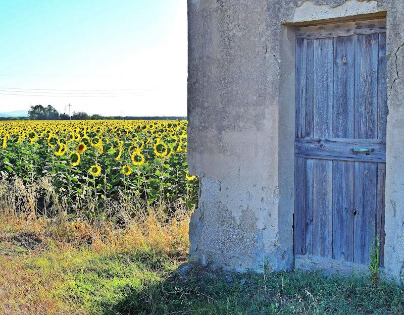 La porta dei girasoli di Luciano Fontebasso