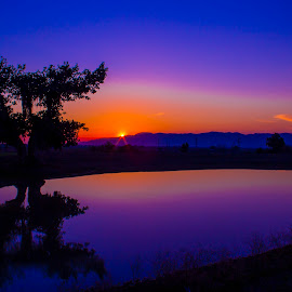 stand in the sunset  by Umair Khan - Landscapes Sunsets & Sunrises ( tree, blue, sunset, pwcreflections, landscape )
