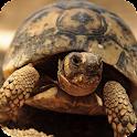 Turtle Live Wallpaper icon