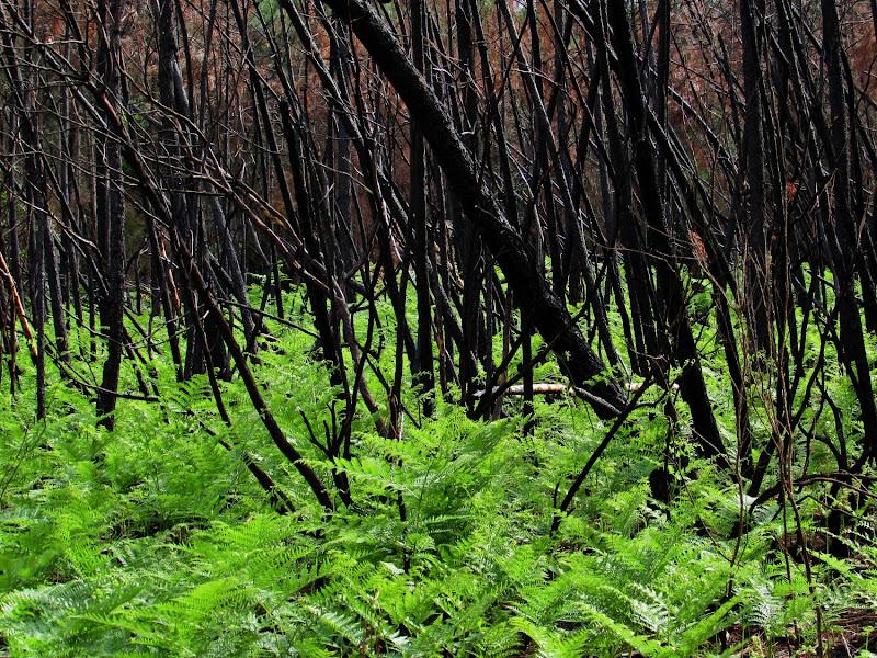 La rinascita dal bosco bruciato dal fuocio di Giorgio Lucca