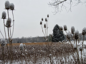 Photo: Snow on thistles and trees at Eastwood Park in Dayton, Ohio.