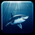 Shark Live Wallpaper icon