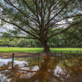 The last of the floods by Andy Rigby - City,  Street & Park  City Parks ( cairns, reflections, flooding, flood, park )