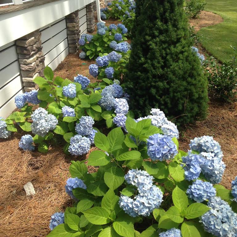 Persnickety Gardens Landscape Designer In Virginia Beach