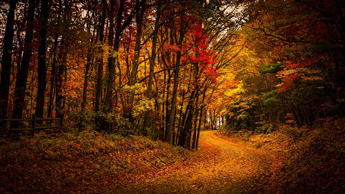 The Quiet Road Less traveled  by Robert Mullen - Landscapes Mountains & Hills ( blue ridge mountains, mountains, winding, autumn, fall, dirt road, roadside, road, leaves,  )