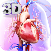 Tải Circulatory System Anatomy APK