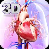 Tải Game Circulatory System Anatomy