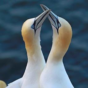 by Blaz Crepinsek - Animals Birds (  )