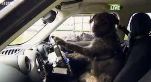 A screenshot of one of the dogs behind the wheel.