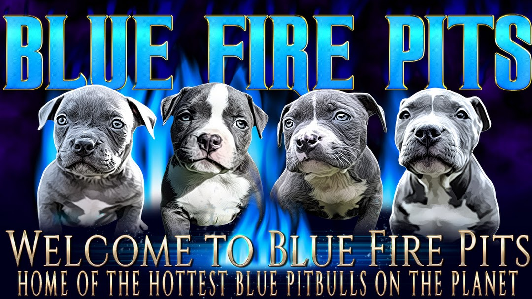 Blue Fire Pits Pitbull Breeder