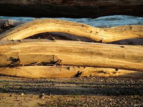 Photo: Diese Baumstämme liegen schon viele Jahre hier.