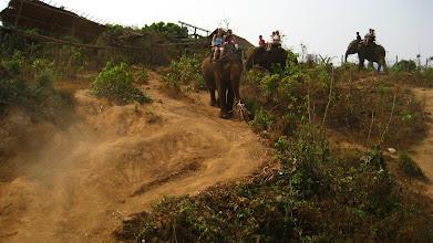Photo: It was surprising how carefully elephants travel