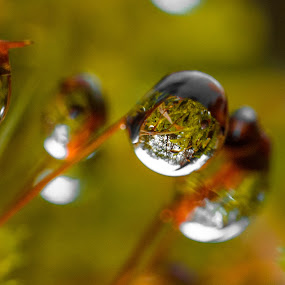 Waterdrops on tiny plant by Natasja and Martijn - Nature Up Close Natural Waterdrops ( plant, macro, nature, autumn, waterdrops, rain )