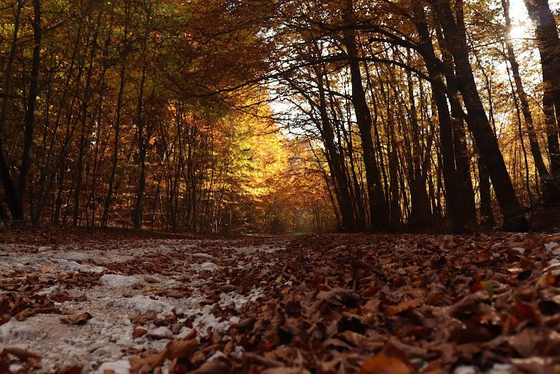 Tappeto di foglie di Bea_aeB