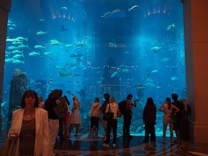 Photo: Aquarium in Atlantis