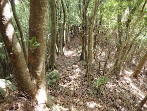 林道終点から尾根に復帰