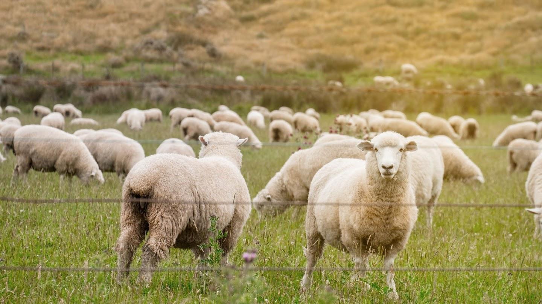 Watch Secret Life of Farm Animals live
