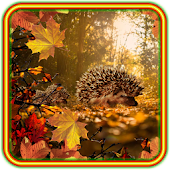 Autumn Hedgehogs LWP