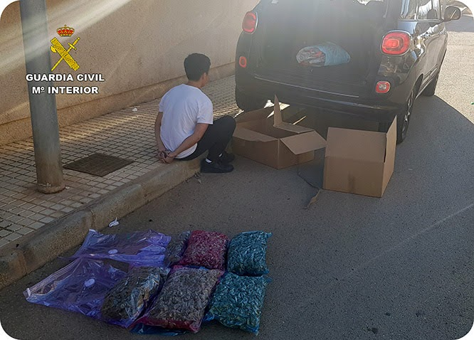 La Guardia Civil desmantela un invernadero de marihuana en un dúplex de Cabo de Palos