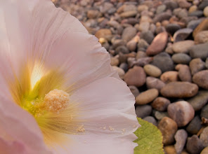 Photo: Contrasting  #floralfriday +FloralFriday+Tamara Pruessner+Eustace James+Beth Akerman+Kiki Nelson