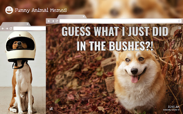 Funny Animal Memes HD Wallpapers New Tab
