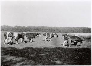 Photo: 1931 Landschap, niet ver van de Melkfabriek St. Martinus ...(omgeving Dr. Batenburglaan).
