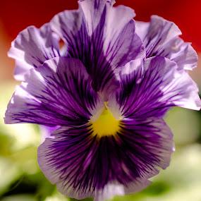 by Gayle M McDermott - Flowers Flower Gardens (  )