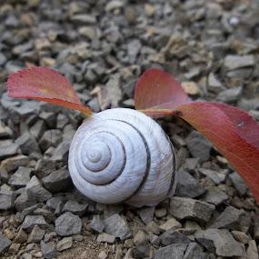 Самота by Georgi Kolev - Nature Up Close Other Natural Objects ( черупка., цветове., форми., камъни., листа. )