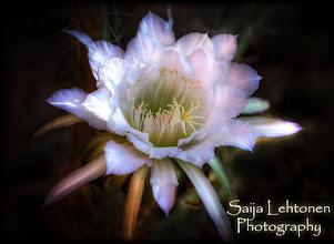 """Photo: """"Simply Stunning"""" - © Saija Lehtonen http://saija-lehtonen.artistwebsites.com/featured/simply-stunning-saija-lehtonen.html"""