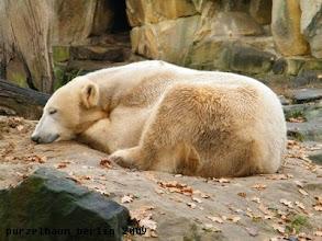 Photo: Und Knut ruht ;-)