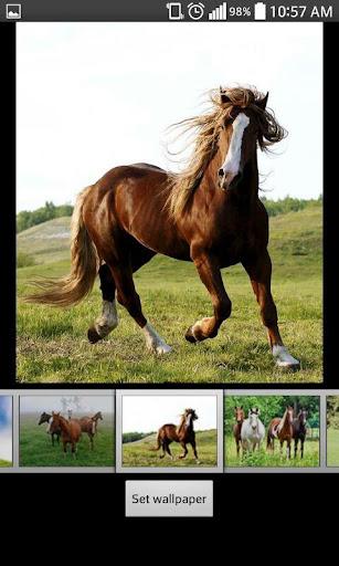 馬のHDライブ壁紙