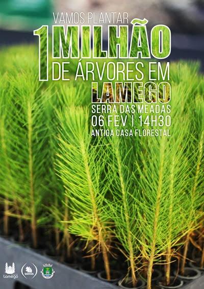 Lamego começa na próxima terça-feira a plantar 1 milhão de árvores