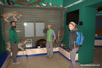 Photo: Georgy's Photo: inferior (by Georgy's expert standards) taxidermic mounts in the Baikal Museum