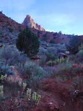 Photo: Evening light on the Watchman