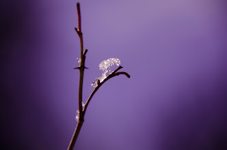 Photo: Macro Snow- Elena Solomon, Life Between Pixels.  Check out prints at: http://smu.gs/15fmXBO
