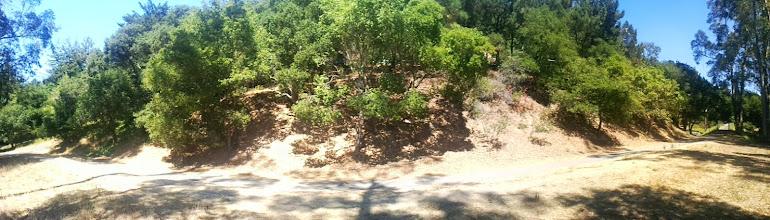 Photo: Primarily native side panorama.