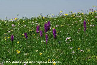 Photo: Si belles pour égayer nos prairies et nos champs...