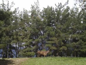Photo: local cows enjoy enviable outdoors
