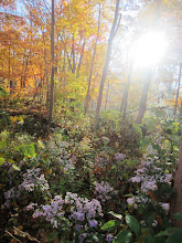 Photo: Purple flowers and bright sunlight through the trees at Hills and Dales Metoprak in Dayton, Ohio.