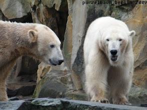 Photo: Gianna wandert - an einem ratlosen Knut vorbei ;-)