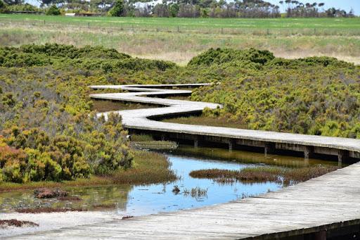 Limeburners Bay Walk, Hovells Creek Reserve - January 2021