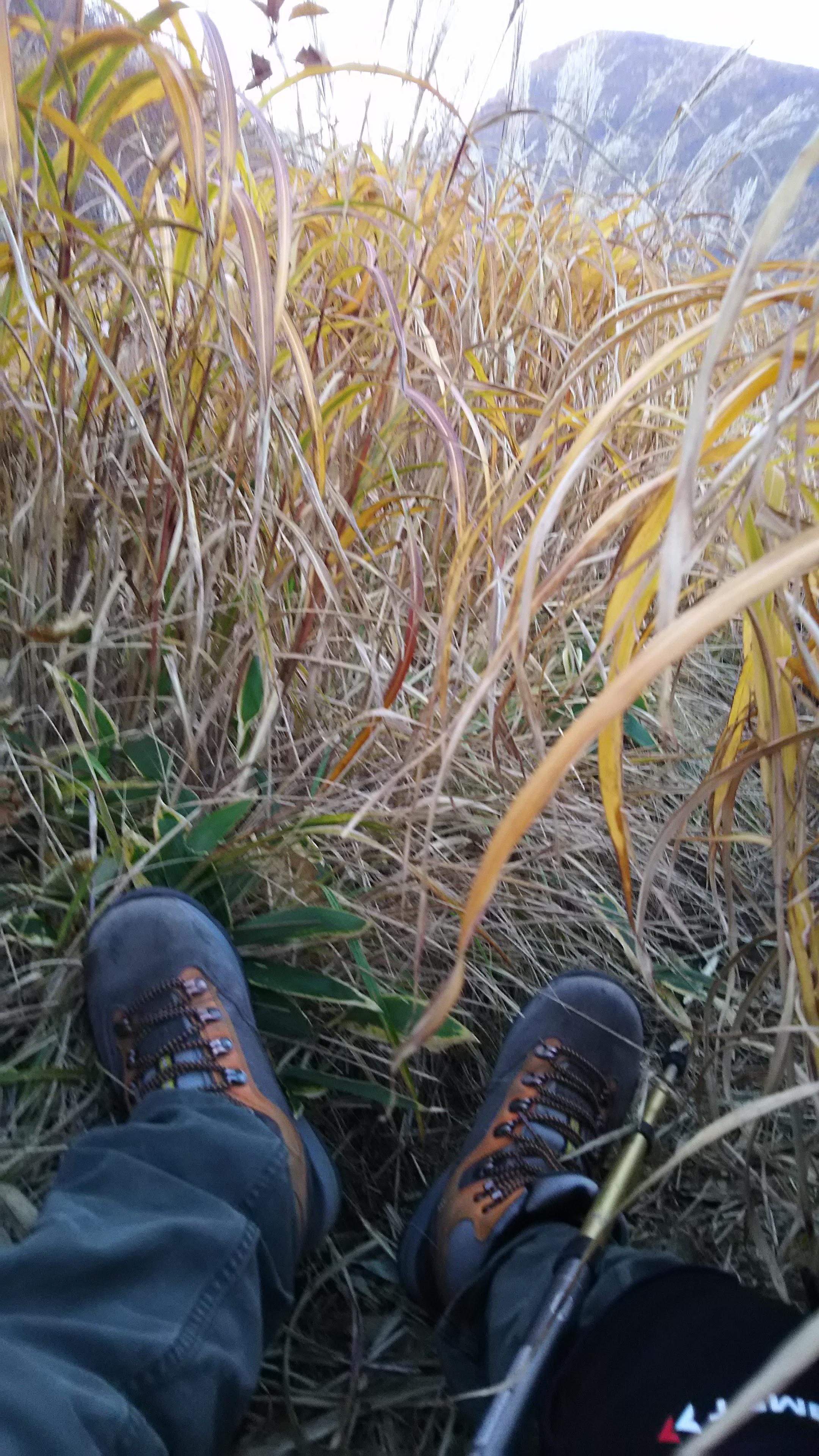 草むらにへたり込む