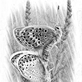 Summer love by John Cuthbert - Drawing All Drawing ( pencil, sketch, butterfly, black and white, rare, blue, silver, summer, studded, drawing )