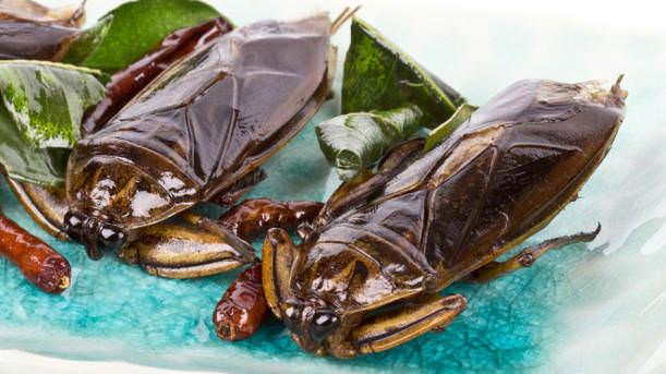 İğrenç Yiyecekler - Devasa Su Böcekleri