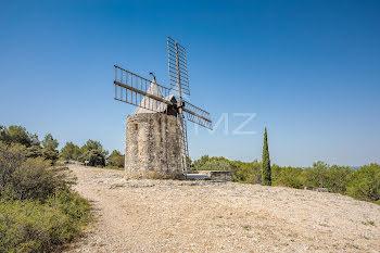 moulin à Fontvieille (13)